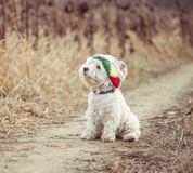 Small dog in the hat Royalty Free Stock Photos