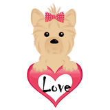 Small dog with heart. Yorkshire terrier puppy, illustration vector illustration
