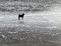 Small dog on the ice stock photos