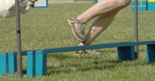 A small dog jumping over the obstacle 4K FS700 Odyssey 7Q stock footage