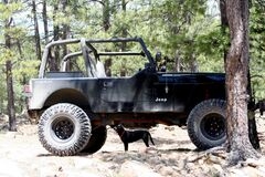 Small Dog Lifts Jeep! Stock Photos