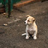 Small dog Royalty Free Stock Photography