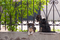 The Small dog looking through the fence Stock Image