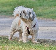 Small dog looking in the public park royalty free stock photos