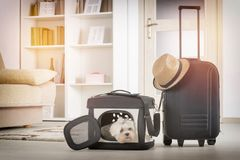Dog sitting in his transporter Stock Images