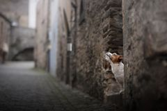Small dog in the old town. A pet in the city. royalty free stock photo