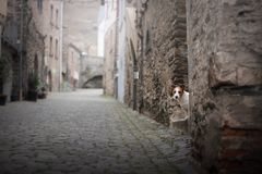 Small dog in the old town. A pet in the city. stock image