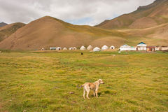 Small dog past the mountain village of Central Asia Stock Photos