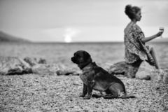 Dog and woman on beach. Small dog pet red color on beach with pretty woman or girl with wine glass sits on stone outdoor over twilight sky near sea or ocean stock photography