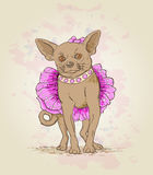 Small dog  in pink dress Royalty Free Stock Photography
