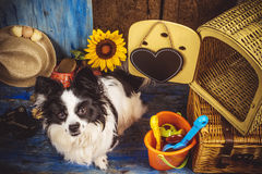 Small dog ready for holidays Royalty Free Stock Photo