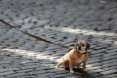 Small dog on road