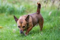 Small dog running under trees Stock Images