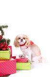 Small dog sitting by Christmas tree Royalty Free Stock Images