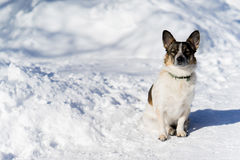 A small dog sitting on snowy road Royalty Free Stock Photography