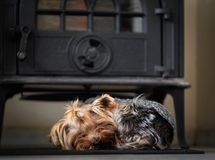 A small dog sleeps near the stove in comfort and warmth royalty free stock photography