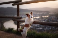 Small dog is standing by the fence at sunset. Pet on the nature. Stock Image
