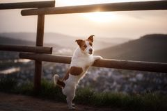 Small dog is standing by the fence at sunset. Pet on the nature. Royalty Free Stock Photography