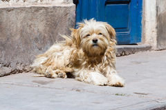 Small dog on the street Stock Image
