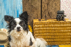 Small dog summer holidays Royalty Free Stock Images