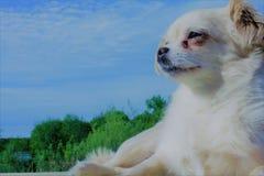 Small dog sunbathing Stock Images