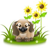 Small dog with sunflowers Stock Images