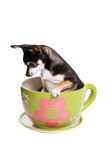 Small dog in tea cup stock image