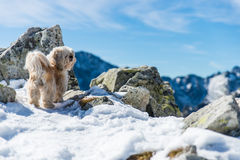 Small dog on top of the mountain Royalty Free Stock Photography