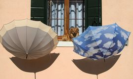 A small dog and two umbrellas sit on a window ledeg - Burano - V Stock Photo