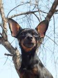 Small dog  Stock Photos