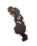 Small Dog Wearing Scout Outfit Stock Photo