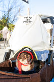 Small Dog Wears Pirate Costume At Eclectic Atlanta Parade Stock Photos