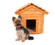 Small dog with wooden dog's house. Small wooden dog's house and small dog stock photo