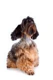 Decorative doggie Stock Photos