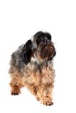 Decorative doggie Stock Photography