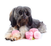Decorative doggie with balls of threads. Stock Photos