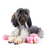Decorative doggie with balls of threads. Stock Images