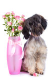 Decorative doggie and roses in a vase. Royalty Free Stock Photos