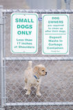 Small Dogs Only Park Stock Image