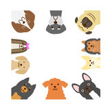 Small dogs square frame. Small cute dogs square frame Stock Image