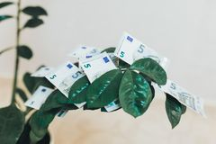 Small dollar tree is growing in a white pot standing in a white room. Concept of money investment and an income growth. Mock up. Small dollar tree is growing in stock photography