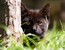 Small domestic black cat with yellow eyes in the grass. Small domestic black cat in the grass stock image