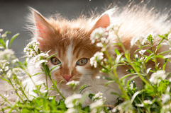 Small domestic cat in the garden Stock Photography