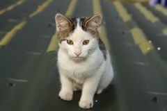 Small domestic cat Royalty Free Stock Photos