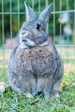 Small domestic rabbit in an autumn setting at sunset Stock Photo