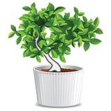 Small domestic tree Royalty Free Stock Photo