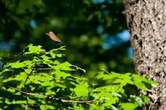 Small dragonfly in forest Royalty Free Stock Photos