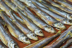 Small dried fish lay in rows on a table. Stock Images