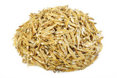 Small dried fish on white Stock Photos