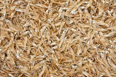 Small dried fishes Royalty Free Stock Photo